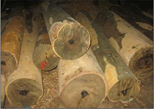 欧洲白蜡木木材进口广州黄埔港报关清关代理公司/原木材进口清关