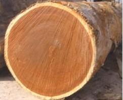 马来西亚西施(贝壳杉)原木进口广州黄埔港报关商检清关代理公司