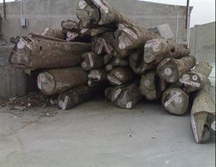 香柏木原木材进口广州黄埔港报关商检熏蒸清关代理公司